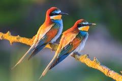 Pájaros coloreados en los rayos del sol Foto de archivo