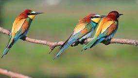 Pájaros coloreados vida almacen de metraje de vídeo
