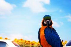 Pájaros coloridos con el cielo azul Foto de archivo