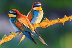 Pájaros coloridos hermosos en los rayos calientes del sol Fotografía de archivo