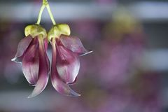 Pájaros como la primavera púrpura de la flor foto de archivo