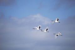 Pájaros con las alas imagen de archivo