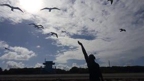 Pájaros conmovedores Imagenes de archivo