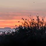 Pájaros contra el cielo de la tarde Imágenes de archivo libres de regalías