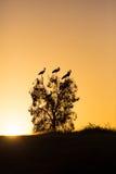 Pájaros contra el cielo de la tarde Fotografía de archivo libre de regalías