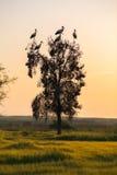 Pájaros contra el cielo de la tarde Imagen de archivo