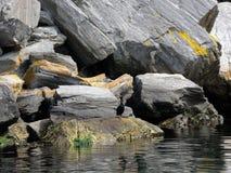 Pájaros, cormoranes Fotos de archivo