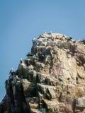 Pájaros costeros en roca fotografía de archivo