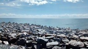 Pájaros de agua foto de archivo libre de regalías