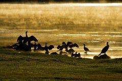 Pájaros de agua en la salida del sol Imágenes de archivo libres de regalías