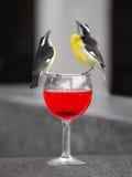 Pájaros de Bananaquit sobre el vidrio de vino Fotografía de archivo