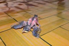 Pájaros de bebé imagenes de archivo
