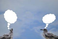 Pájaros de charla Fotos de archivo