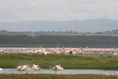 Pájaros de Kenia Imagen de archivo