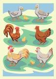 Pájaros de la granja del vector Fotos de archivo