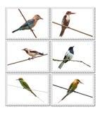 Pájaros de la India Foto de archivo libre de regalías