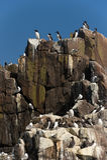 Pájaros de la jerarquización Imagenes de archivo