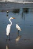 Pájaros de la línea de la playa Fotos de archivo libres de regalías