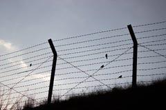 Pájaros de la libertad Fotos de archivo libres de regalías