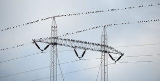 Pájaros de la migración Fotografía de archivo libre de regalías