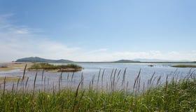 Pájaros de la migración de la primavera del sitio del prado del río del terreno de aluvión foco hacia números más inferiores y me Fotografía de archivo