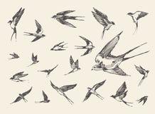 Pájaros de la multitud que vuelan bosquejo dibujado tragos del vector Fotografía de archivo