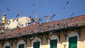 Pájaros de la paloma en los tejados en el cuadrado del templo de Katmandu Boudhanath en Nepal almacen de video