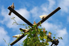 Pájaros de la paloma que se sientan con el cielo azul Foto de archivo libre de regalías