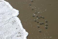 Pájaros de la playa Fotografía de archivo libre de regalías