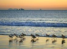 Pájaros de la playa Imágenes de archivo libres de regalías