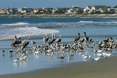 Pájaros de la playa del paisaje de la línea de la playa del océano imagenes de archivo