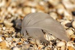 pájaros de la pluma imagen de archivo