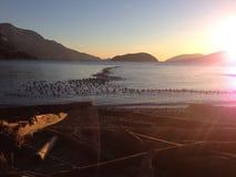 Pájaros de la puesta del sol Imagen de archivo libre de regalías
