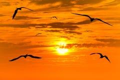 Pájaros de la puesta del sol que vuelan siluetas Foto de archivo libre de regalías