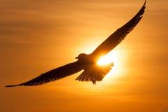 Pájaros de la silueta en la puesta del sol Gaviotas en la puesta del sol Imágenes de archivo libres de regalías