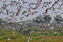 Pájaros de los humedales del cuchillero Bay imágenes de archivo libres de regalías