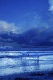 Pájaros de mar Fotografía de archivo libre de regalías