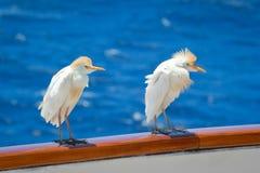 Pájaros de mar Foto de archivo