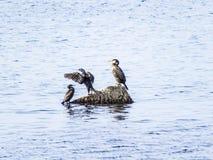 Pájaros de mar fotos de archivo