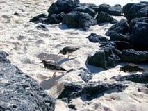 Pájaros de mar imagen de archivo libre de regalías