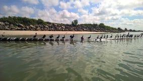 Pájaros de mar en el mar imagen de archivo