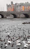 Pájaros de mar en Estocolmo Imágenes de archivo libres de regalías