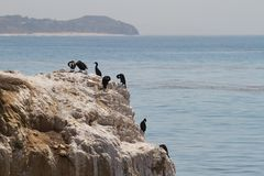 Pájaros de mar en las rocas fotos de archivo libres de regalías