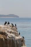 Pájaros de mar en las rocas Imágenes de archivo libres de regalías