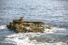 Pájaros de mar en una roca con las ondas Fotos de archivo