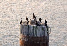 Pájaros de mar en una viruta Imagenes de archivo