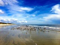 Pájaros de mar recolectados en costa Fotos de archivo libres de regalías