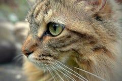 PÁJAROS DE OBSERVACIÓN DE TABBY CAT Foto de archivo libre de regalías
