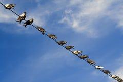 Pájaros de reclinación Imagenes de archivo