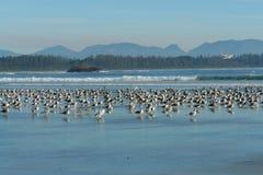 pájaros de reclinación Foto de archivo libre de regalías